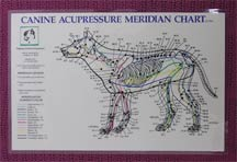 canine acupuncture points